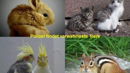 Die Polizei Wolfsburg hat in einer Wohnung mehrere verwahrloste Tiere gefunden.