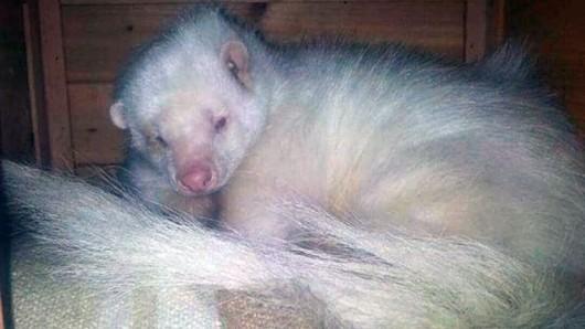 Die Tierschützer hoffen dringend auf Hinweise nach dem Verbleib von Stinktier Loki.
