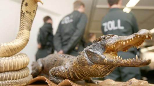 Erschreckend viele Verstöße gegen Tier- und Artenschutzvorschriften haben die Beamten des Hauptzollamts Braunschweig im vergangenen Jahr registriert (Symbolbild).