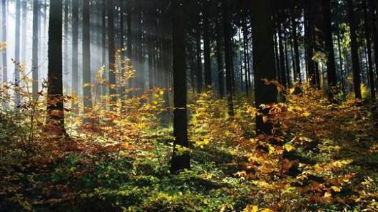 Der größte Naturwald soll in der Nähe von Hessisch Oldendorf entstehen. (Archivbild)
