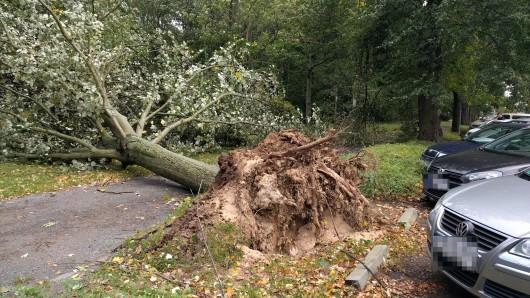 Bäume, die Opfer der Stürme der vergangenen Zeit wurden, sollen nun ersetzt werden (Archivbild).