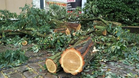 Kleinholz: Was der Orkan nicht zerkleinert hat, erledigten Feuerwehrleute und Stadt-Mitarbeiter mit der Säge.