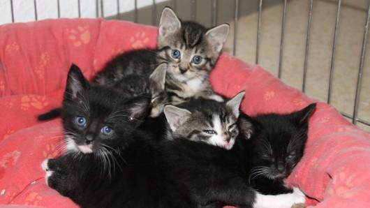 Die kleinen Kätzchen suchen ein neues Zuhause.