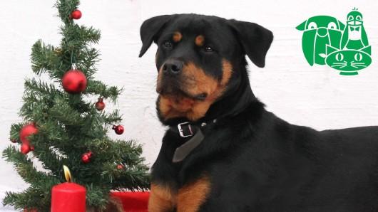 Der Tierschutzverein Gifhorn und Umgebung bereitet für den 8. Dezember einen Gabentisch für Tiere vor.