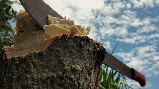 Eine Machete wird in vielen Ländern zum Holzhaken und Unkratjäten verwendet (Symbolbild).