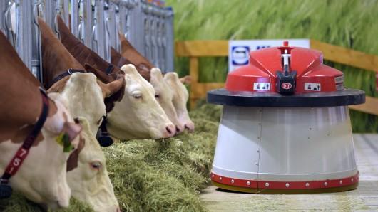 Ein Futterroboter fährt am 15.01.2016 am Eröffnungstag der Grünen Woche in Berlin in der Halle des Erlebnisbauernhofs an einer Gruppe Milchkühe entlang (Archivbild).