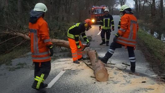 Der umgestürzte Baum hatte die K59 bei Essehof blockiert; davor hatte sich ein Pkw beim Wenden festgefahren.