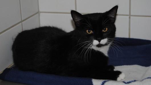 Laut einer Mitarbeiterin des Tierheims geht es der Katze wieder gut.