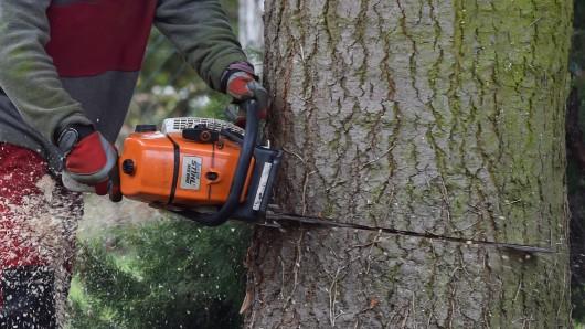 An der K83 müssen die Bäume fallen (Symbolbild).