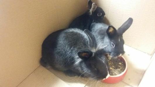 Im Tierheim haben es die Kleinen nun erstmal warm und gemütlich.