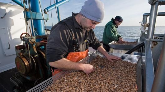 Die Fischer wollen die Krabben wieder in Ostfriesland pulen lassen. (Archivbild)