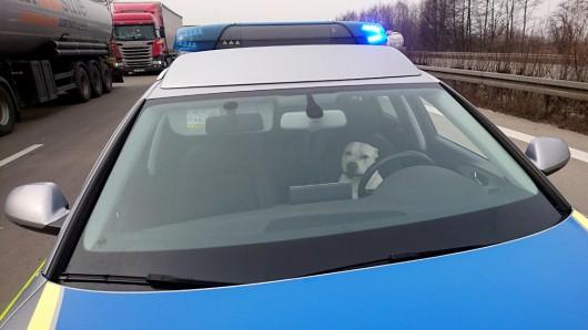 Zack, da saßen die Hunde im Streifenwagen.