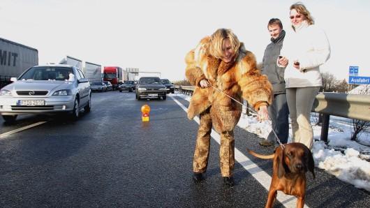 Weil sich ein Hund losgerissen hatte und immer wieder über die A7 rannte, musste die Autobahn für etwa eine halbe Stunde gesperrt werden (Symbolbild).
