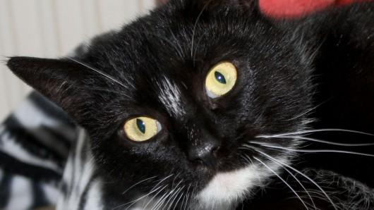 Katze Amy lebt derzeit im Tierschutzzentrum Ribbesbüttel.