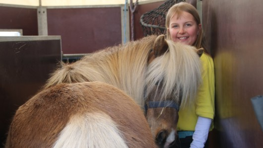 Von nah und fern sind verschiedene Züchter angereist, um bei der Pony-Schau in Volkmarode dabei zu sein.