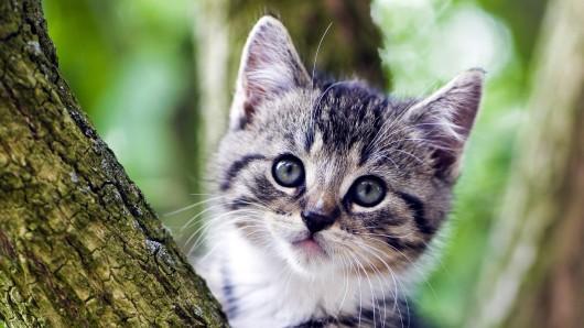 Eine Katze saß in Fallersleben mehrere Tage in einem Baum fest (Symbolbild).