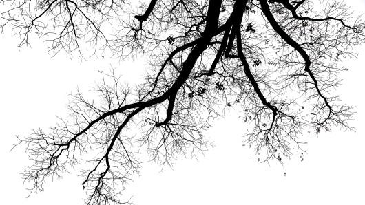 Der junge Mann hat den Baum in Hornburg mit solcher Wucht gerammt, dass er ihn entwurzelt hat (Symbolbild).