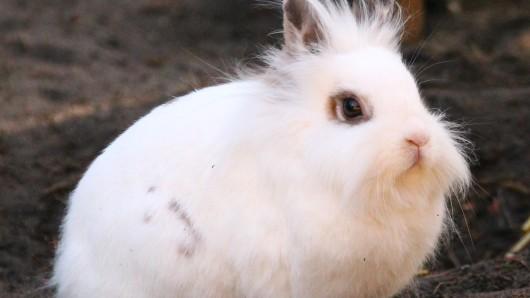 Kaninchendame Mia wartet im Tierschutzzentrum in Ribbesbüttel auf ein neues Zuhause.