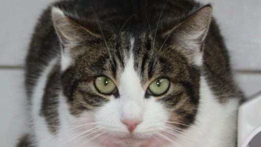 Diese hübsche Katzendame sucht ein neues Zuhause.