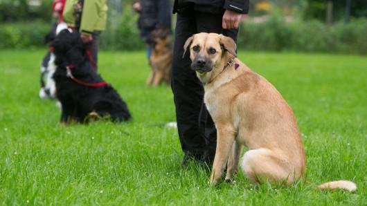 Der Tierschutzbund fordert den Hundeführerschein für alle.