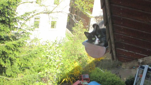 Die Katze hatte sich in eine Dachrinne im Westlichen Ringgebiet verirrt und musste von der Feuerwehr gerettet werden.