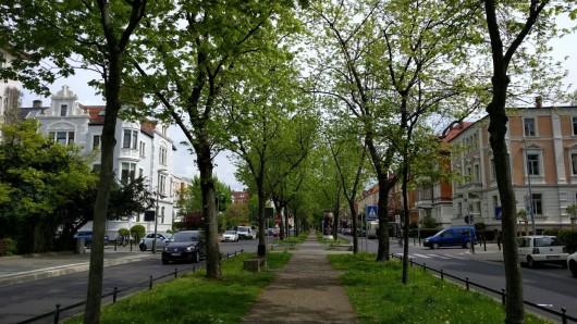 Noch zieren Bäume die Jasperallee - die Verwaltung möchte sie fällen und neue Bäume pflanzen. (Archivbild)