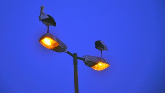 Ein Radfahrer war am Donnerstagabend offenbar zu blau, um an einer Straßenlaterne vorbeizukommen... (Symbolbild)