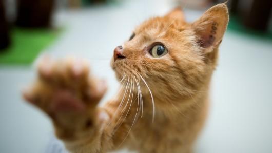 Die Katze wollte nur schnell die Straße überqueren... (Archivbild)