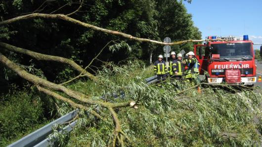 Die Feuerwehr musste den Baum zersägen, um die Straße zu räumen.