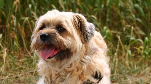 Casper ist 11 Jahre alt, kastriert und ganz lieb.