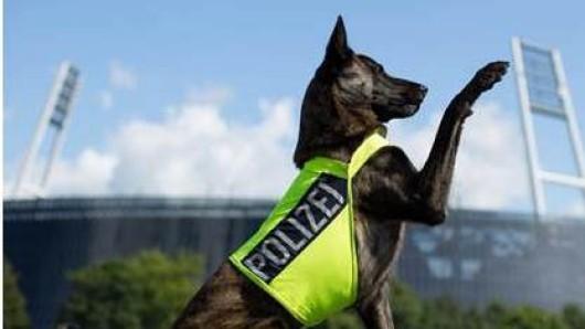 Kein Feierabend: Der Drogenspürhund hat auch im Urlaub angeschlagen. (Symbolbild)