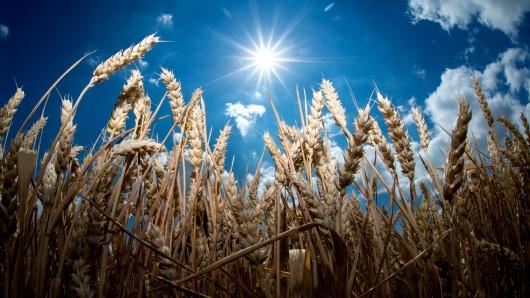 In vielen Regionen war das Wetter in diesem Frühjahr zu trocken - Landwirte fürchten eine schlechte Ernte.