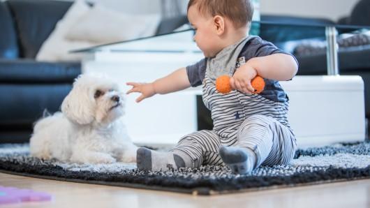 Ein Einjähriger wurde von einem Hund gebissen. (Symbolbild)