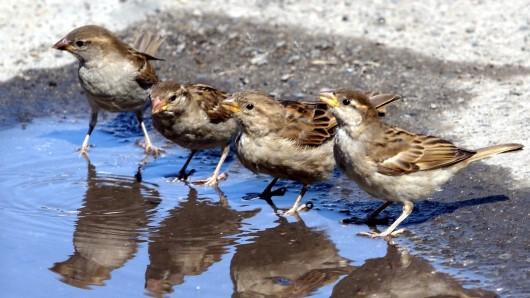 Wildvögel und Insekten freuen sich über eine kleine Tränke. (Symbolbild)