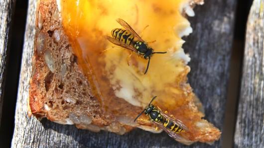 Wespen werden vor allem von Essen angezogen. (Symbolbild)