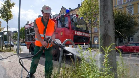 In Salzgitter Bad hilft bereits die Feuerwehr beim Wässern der Bäume. (Symbolbild)