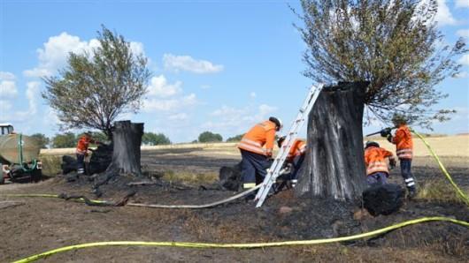 Das Feuer bei Edesbüttel hat auch mehrere Bäume erfasst.