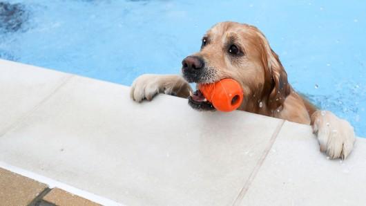 Das Freibad Raffteich öffnet im September erstmalig seine Tore für Hunde.
