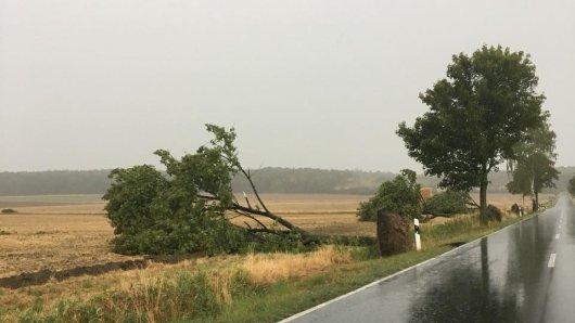 Am Ortsausgang von Gustedt entwurzelte Tief Nadine ganze Bäume.