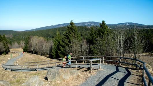 Torfhaus: Ausflügler steigen einen Wanderweg hinauf. Im Hintergrund ist die höchste Erhebung des Harzes, der Brocken, zu erkennen.