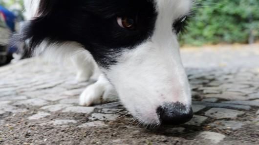Ein Hund hat das Rattengift gefressen und musste notoperiert werden. (Symbolbild)