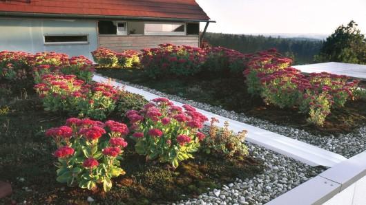 Für die Begrünung einer Garagen- oder Daches eignen sich trockenheitsresistente Pflanzen, die auch Wind gut vertragen.