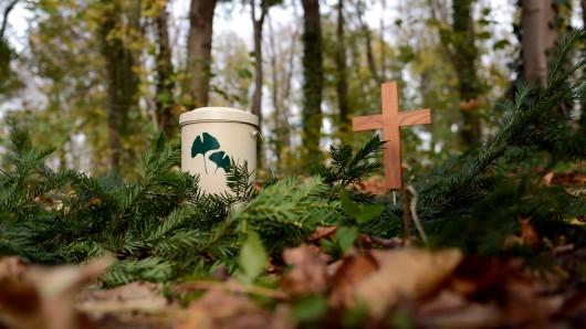 Im Friedwald finden Verstorbene unter Bäumen ihre letzte Ruhe.