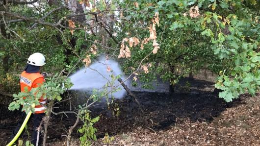 Aus noch unbekannter Ursachse stand am Montagnachmittag ein rund 50 Quadratmeter großes Waldstück bei Flettmar-Bahnhof in Flammen.