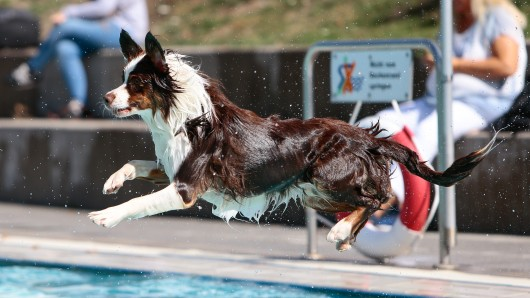 Wer kurz draußen war, wollte meist schnell wieder rein ins Wasser.