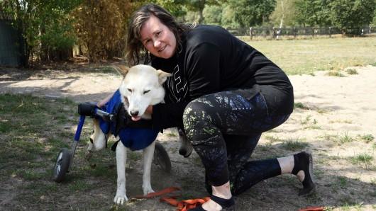 Tierheilpraktikerin Angela Wiatowski hat sich bislang um die querschnittsgelähmte Husky-Hündin Lacey gekümmert. Nun hat das Tier eine dauerhafte neue Bleibe gefunden.