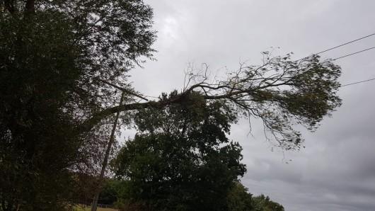 Der Baum war auf eine Oberleitung zwischen Ettenbüttel und Gielde gefallen.