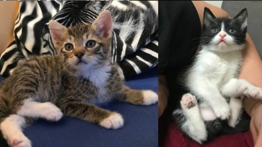 Gleich 50 Katzenkinder suchen ein neues zu Hause.