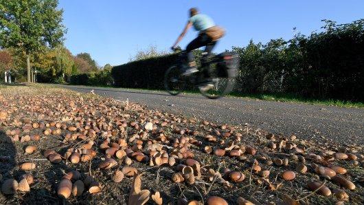 Radfaher müssen vorsichtig sein - Eicheln werden schnell zur Rutsch-Fallle.