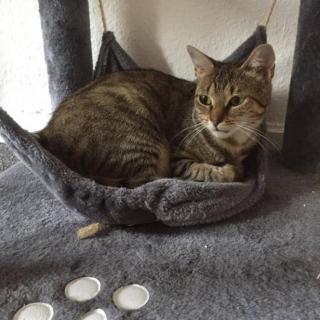 Katze Nika sucht ein Für-Immer-Zuhause.